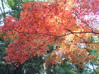 聖宝寺の紅葉
