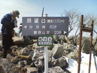 藤原岳と福寿草