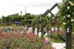 浜寺公園のバラ園