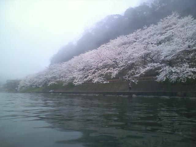春爛漫の海津大崎