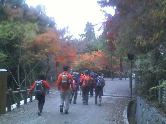 晩秋の原生林道