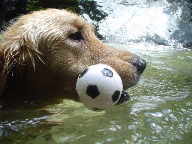 犬とシャワークライム