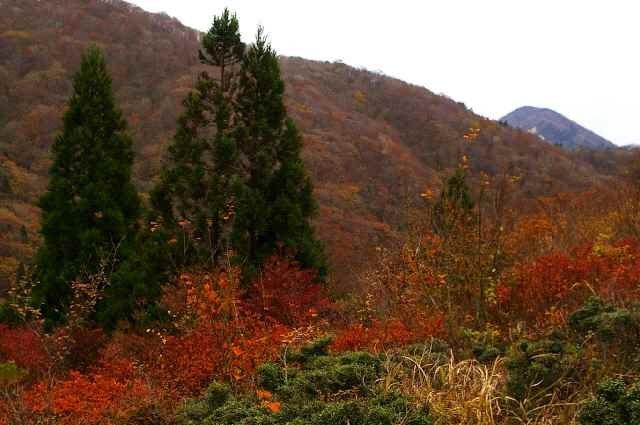 紅葉の武奈ヶ岳 2011
