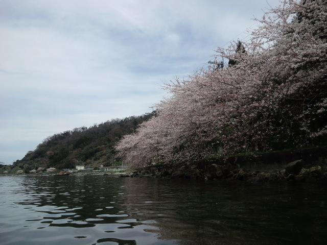 春の沖島周遊