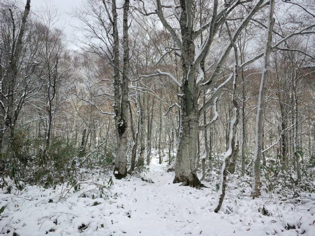 白い黒姫山2012.11